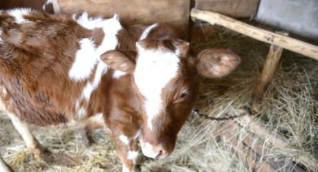 Власти Астраханской области будут бороться с несанкционированным вывозом скота